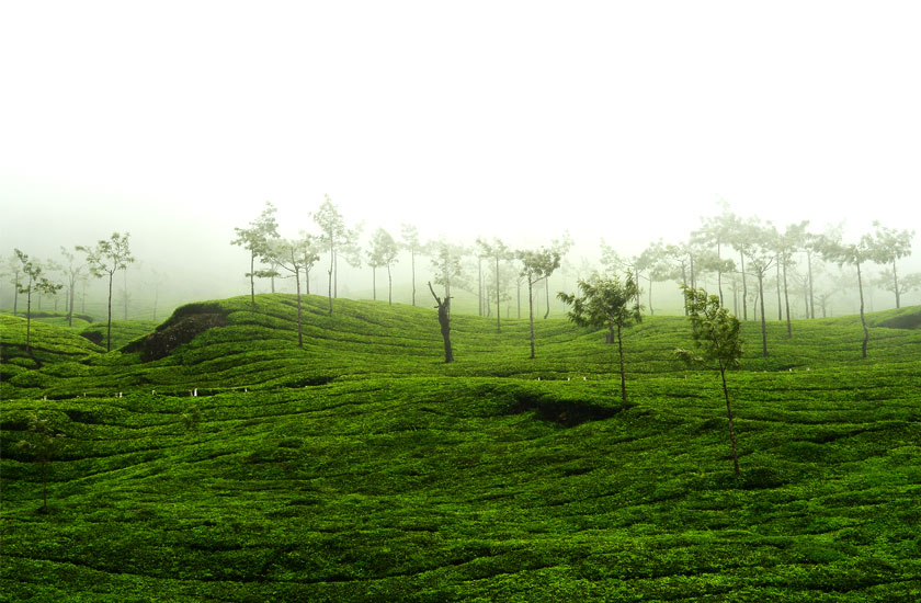 http://www.keralatour.co/images/media/media_images/munnar28.jpg
