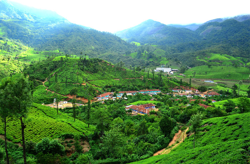 http://www.keralatour.co/images/media/media_images/munnar35.jpg