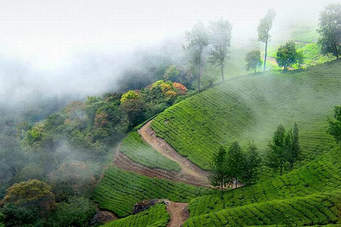 http://www.keralatour.co/images/media/media_images/thekkady8.jpg